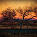 Railroad Tree at Sunset-Edit.jpg