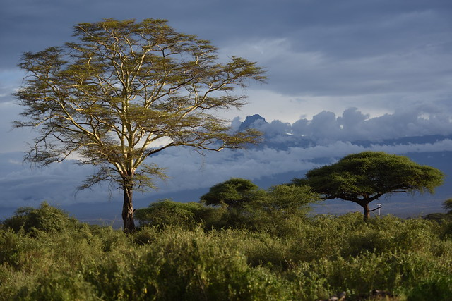 Mount Kenya in the clouds