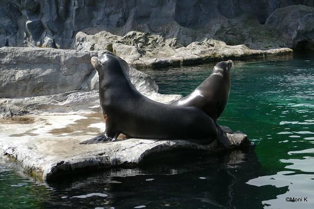 08-Seelöwen