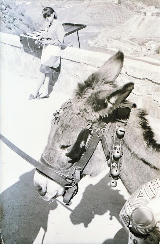 Burro del vendedor de cerámica en el Valle, años 60. Fotografía de Victoriano de Tena Sardón