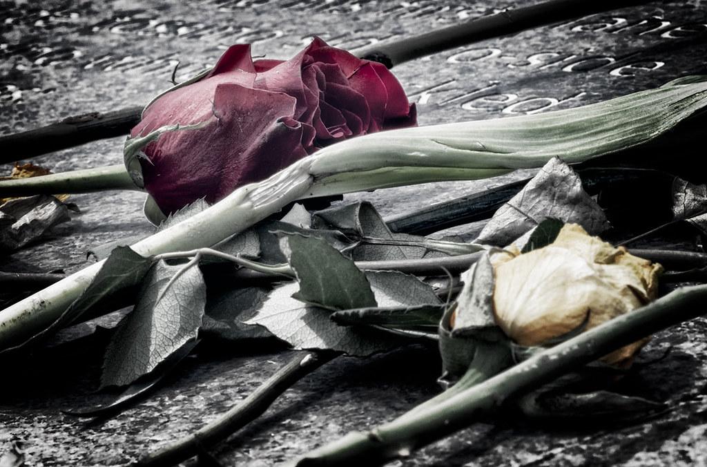 roses - columbine memorial 4/20/2019