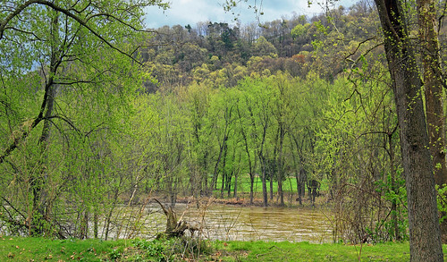 pennsylvania columbiacounty southcentretownship columbiapark susquehannariver forest trees deciduous temperatedeciduousforest riparian palustrine palustrineforest spring nature creativecommons