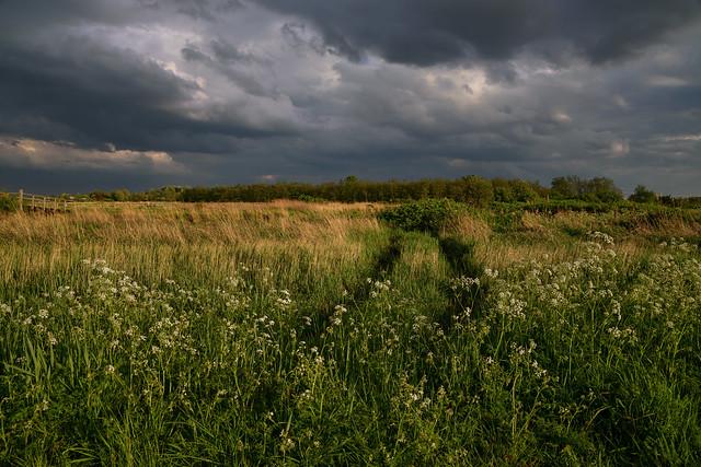 Evening in Twiske