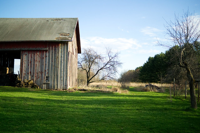 The Barn and a Tree