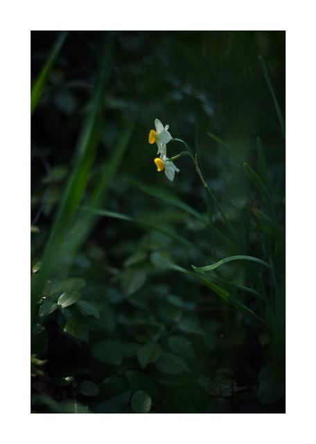 2019/3/17 - 10/15 photo by shin ikegami. - SONY ILCE‑7M2 / Carl Zeiss C Sonnar T* 1.5/50 ZM