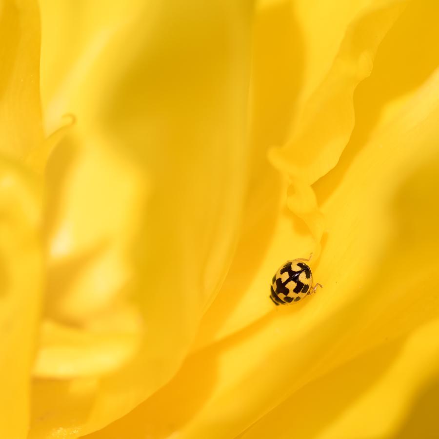Qu'est ce qui est jaune et qui attend ? 47672031692_8fbd811fec_o