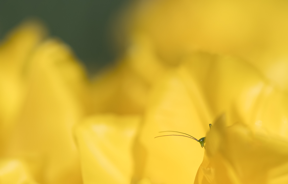 Qu'est ce qui est jaune et qui attend ? 47672031942_cd0412d5a1_o