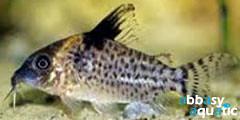 cory delphax