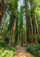 Terry and redwoods
