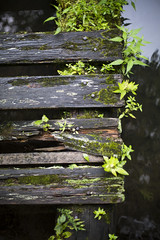 dock decay