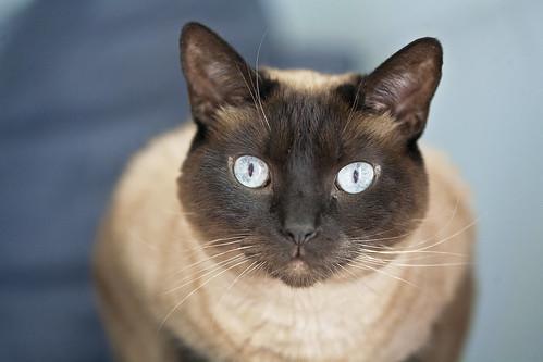 kitty stares ( explore )