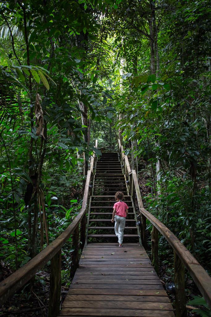 20190427 Amazonas - Anavilhanas National Park 066.jpg