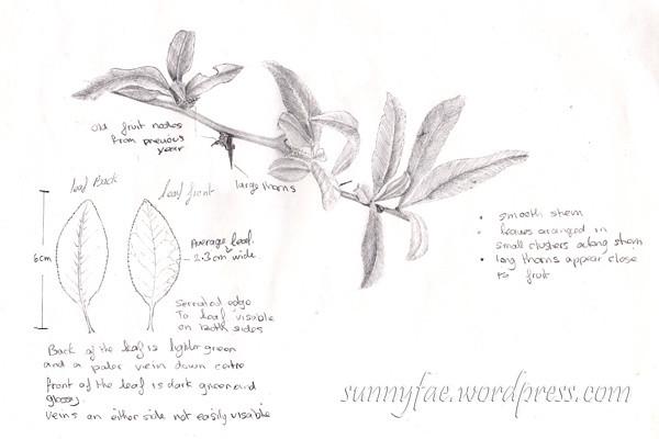 leaf drawing homework wk4