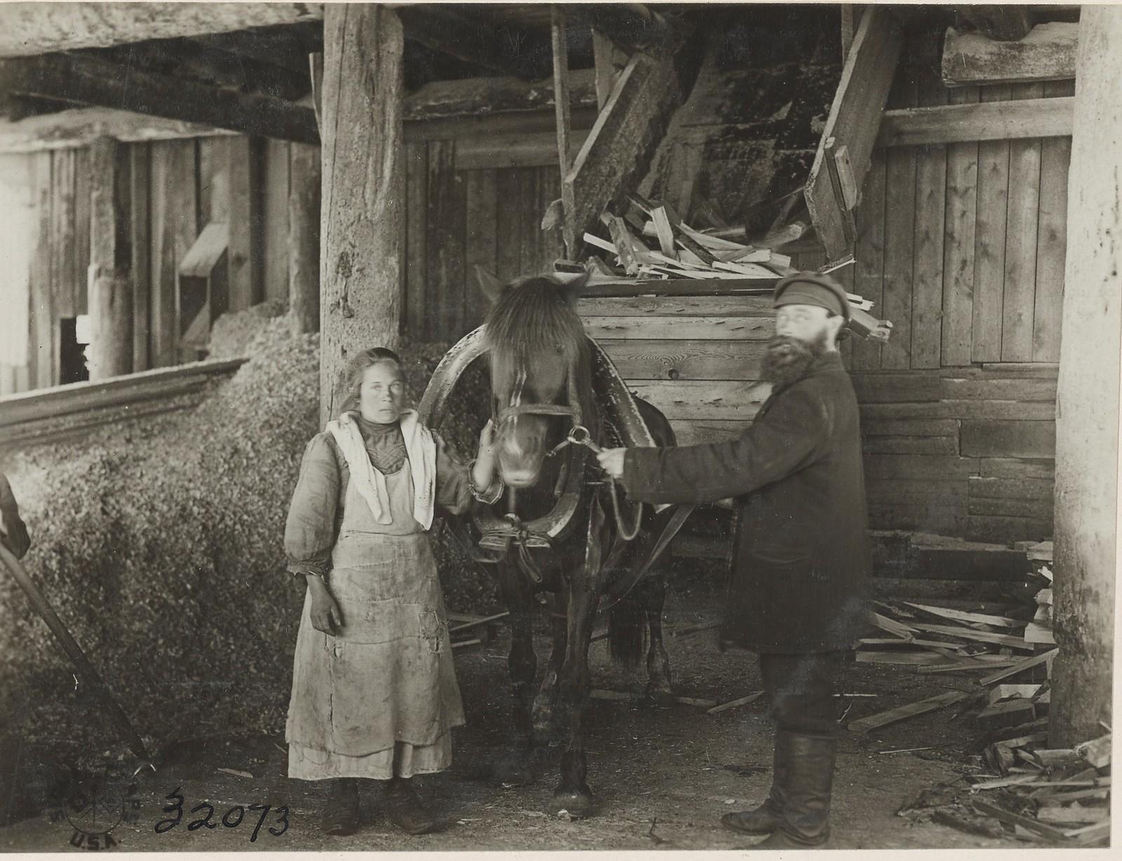 Архангельск. Подвода, груженная дровами