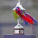 John Ward Cup