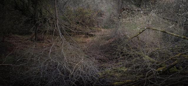 woodland-9