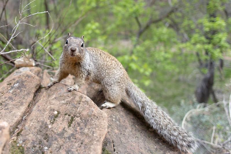 Ein neugieriges Eichhörnchen.