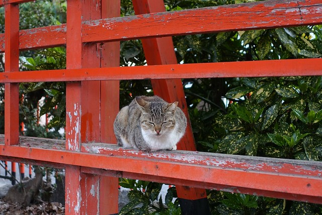 Today's Cat@2019-04-24