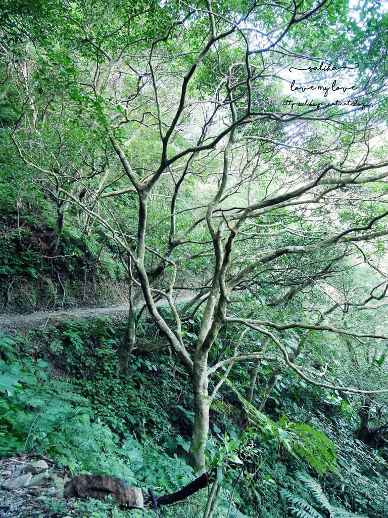 宜蘭礁溪好玩行程林美石磐步道一日遊景點 (3)