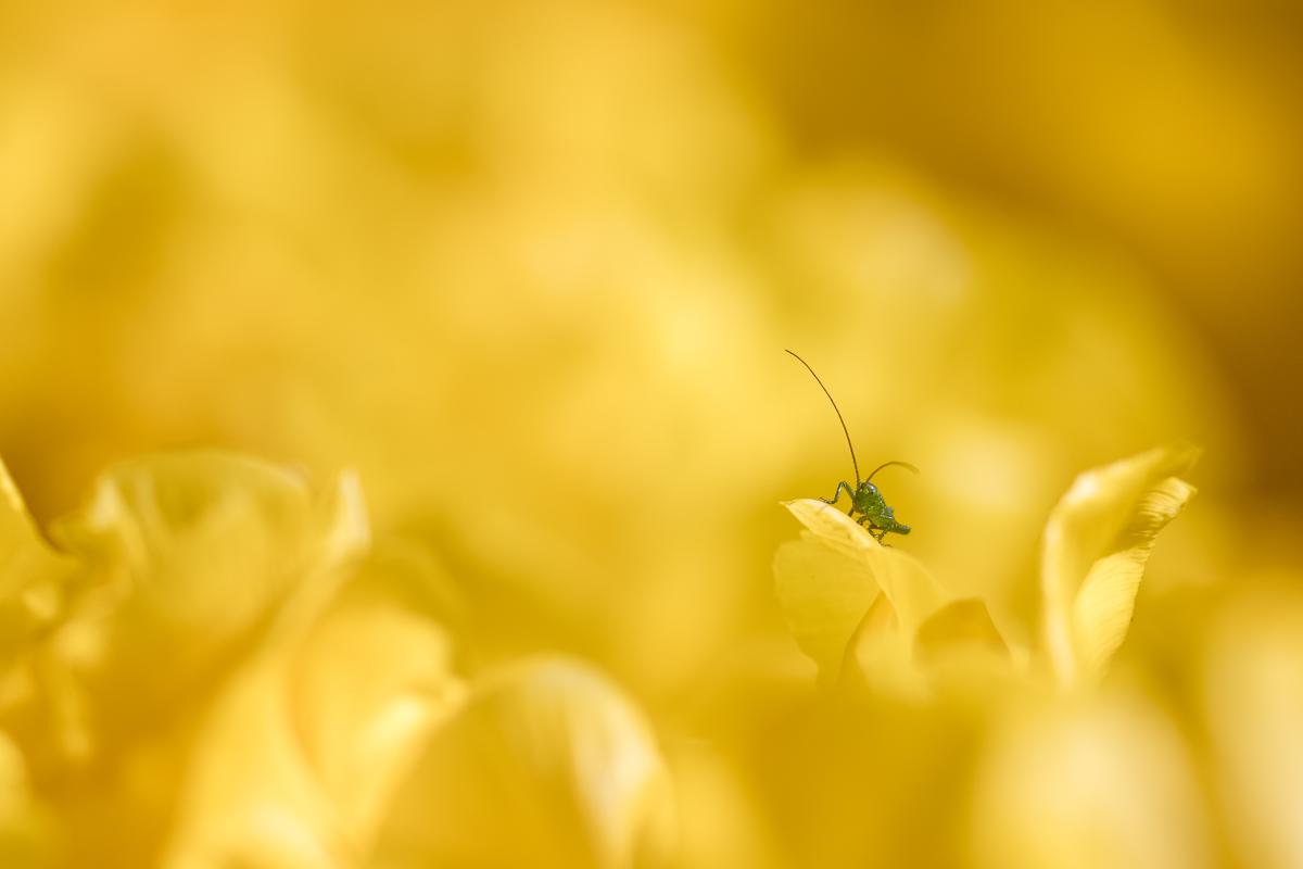 Qu'est ce qui est jaune et qui attend ? 47689778782_75cf649528_o