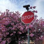 Spring stop sign in Preston