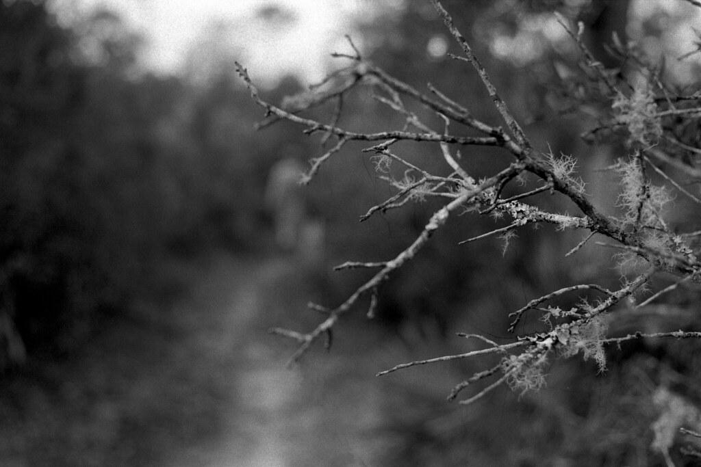 Beyond Lichen