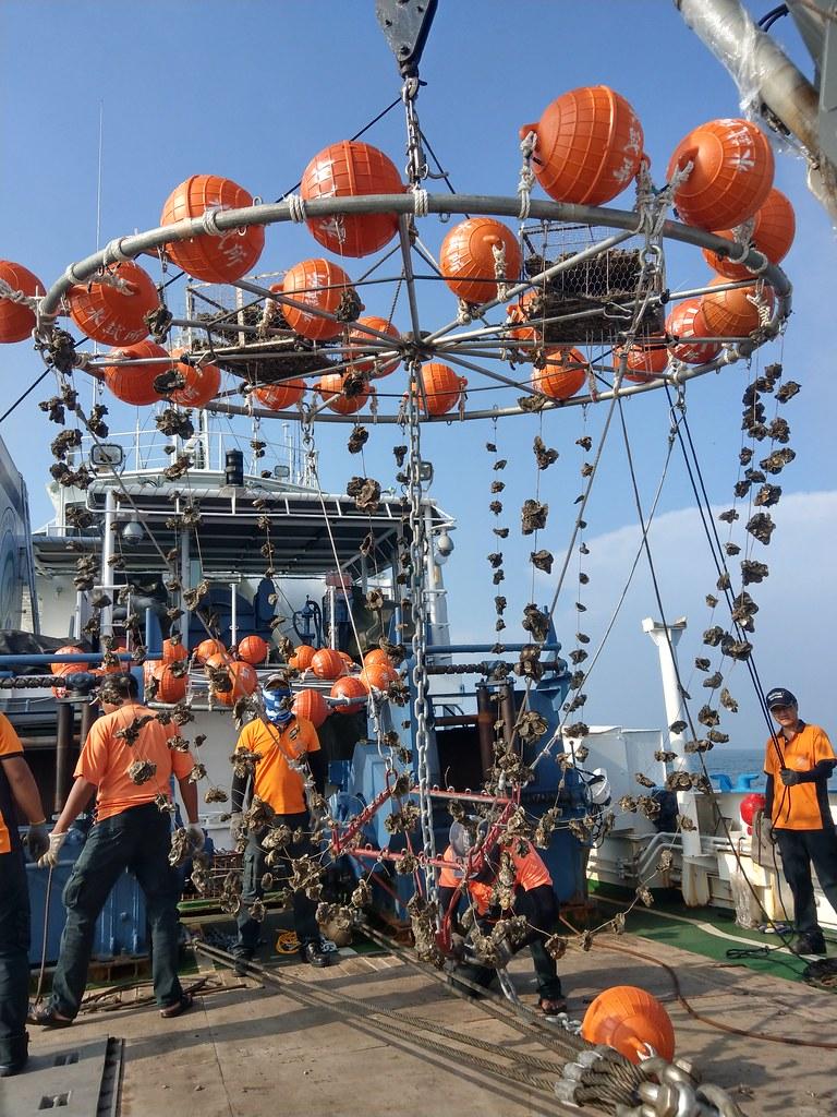 離岸牡蠣養殖試驗設施。圖片提供:水試所。