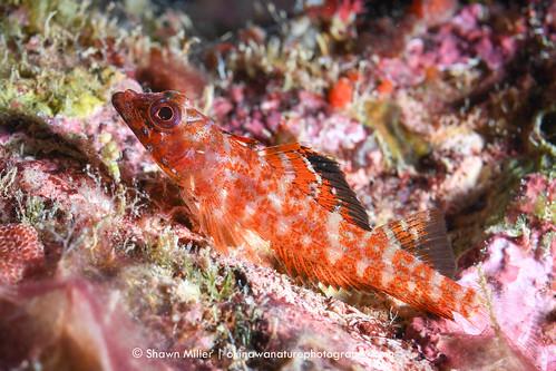 Unidentified fish of Okinawa