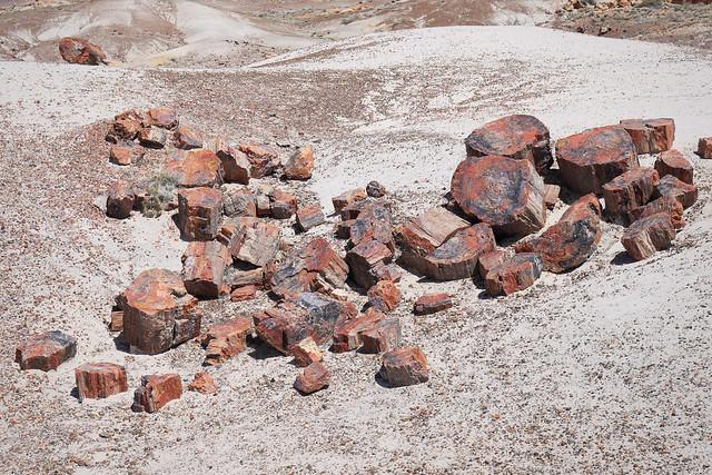 Arizona - Petrified Forest National Park