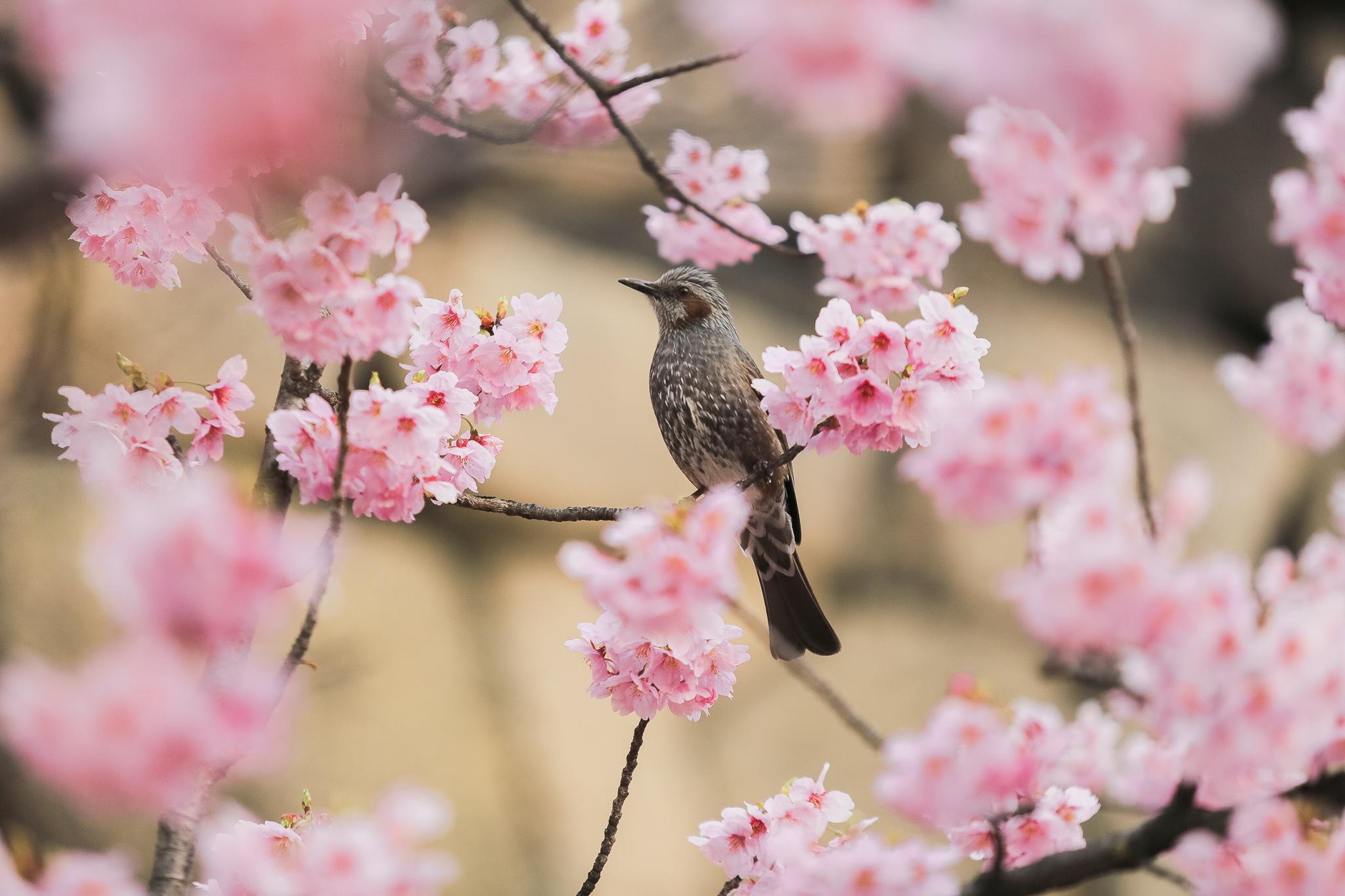 JAPAN PRENUP_ (41)