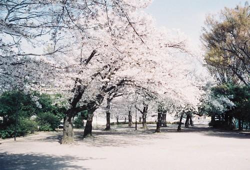 NIPPONの春