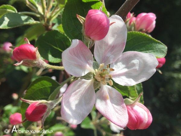 rosee6