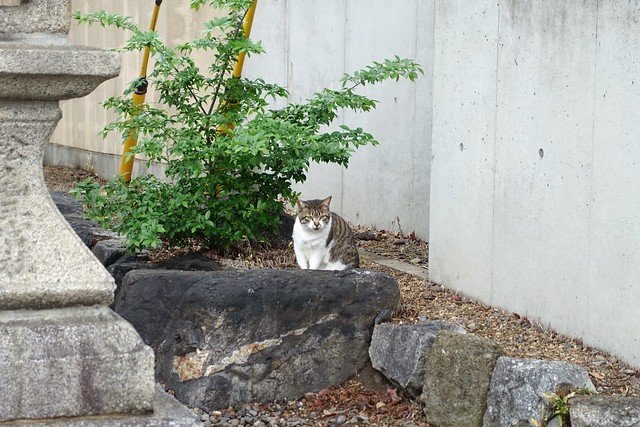 Today's Cat@2019-04-25