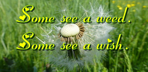 See a wish