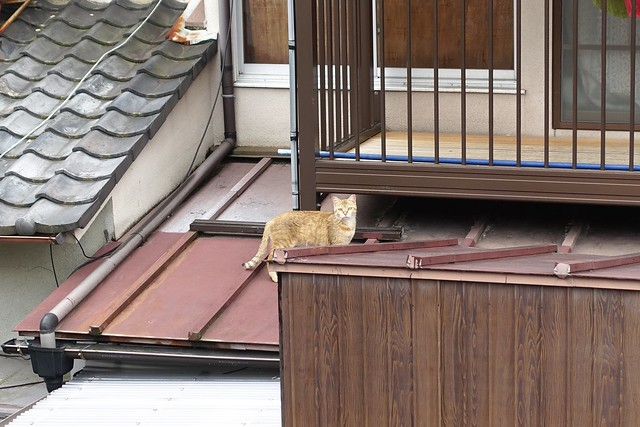 Today's Cat@2019-05-01