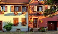 Bergheim (Haut-Rhin, Fr) – Maisons d'Alsace : fleurs & couleurs