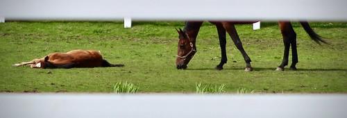 horse farm7
