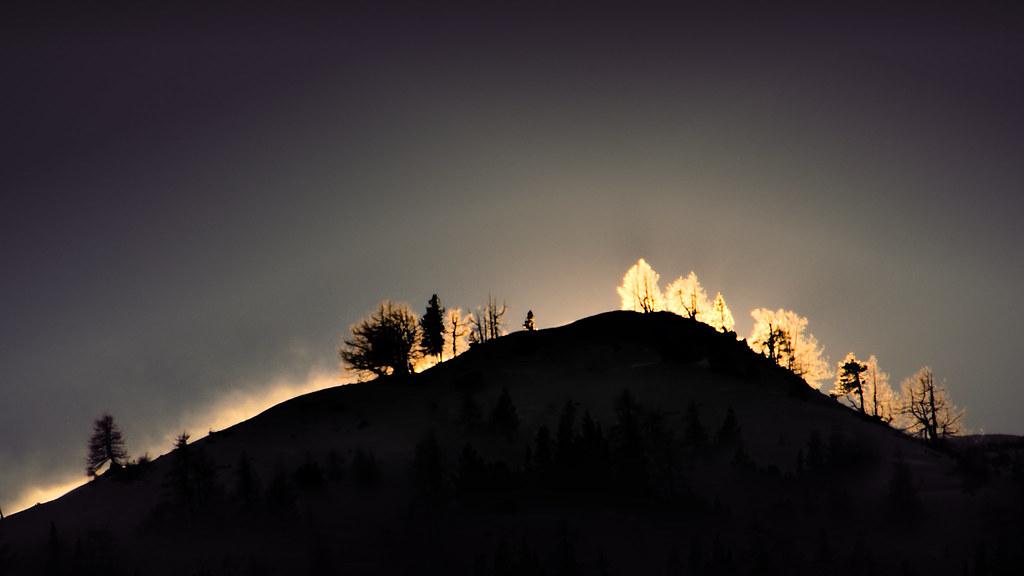 Trees on the ridge