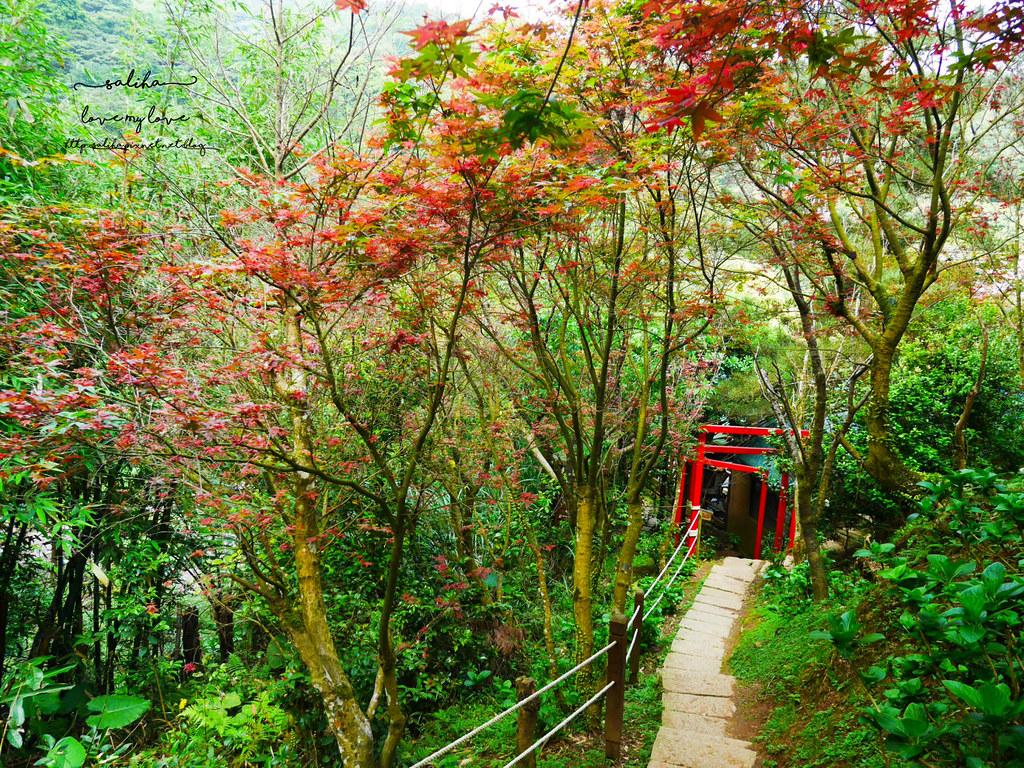 陽明山一日遊ig打卡景點推薦台北奧萬大楓葉季景觀餐廳親子戲水 (12)