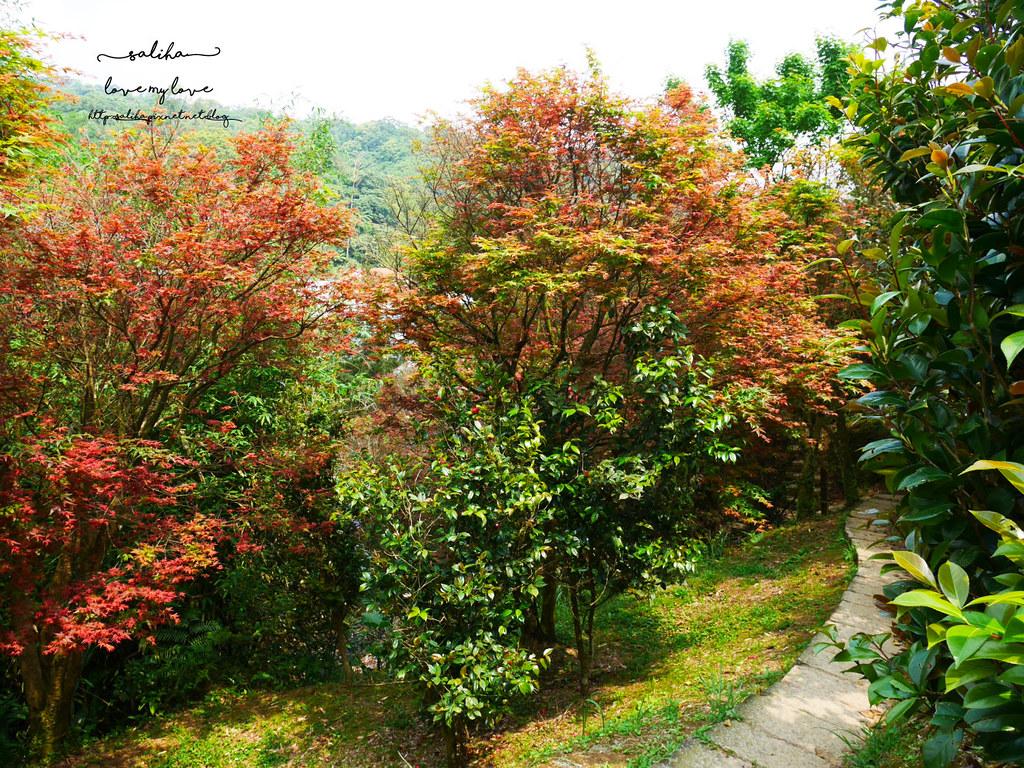 陽明山一日遊ig打卡景點推薦台北奧萬大楓葉季景觀餐廳親子戲水 (11)
