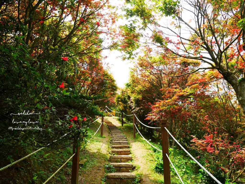陽明山一日遊ig打卡景點推薦台北奧萬大楓葉季景觀餐廳親子戲水 (9)