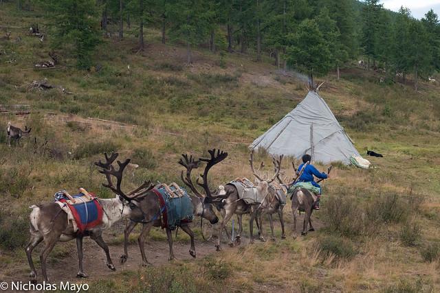 Leading The Reindeer