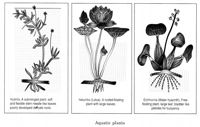 The Living Organisms and Their Surroundings Class 6 Notes Science Chapter 9 2