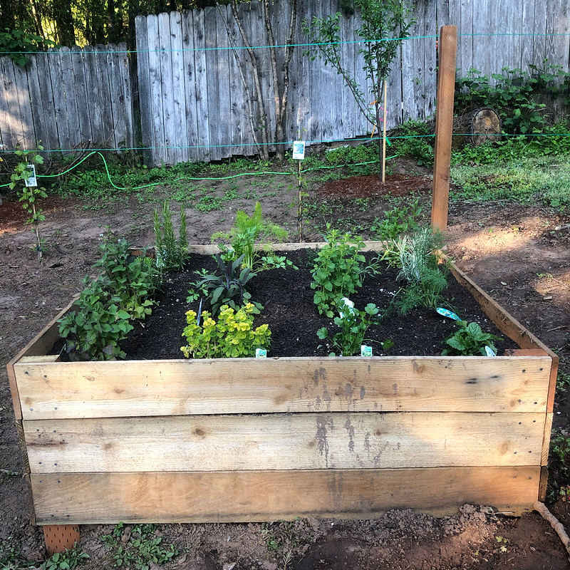 Square-Foot Gardening (Herbs)