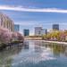 Springtime in Osaka