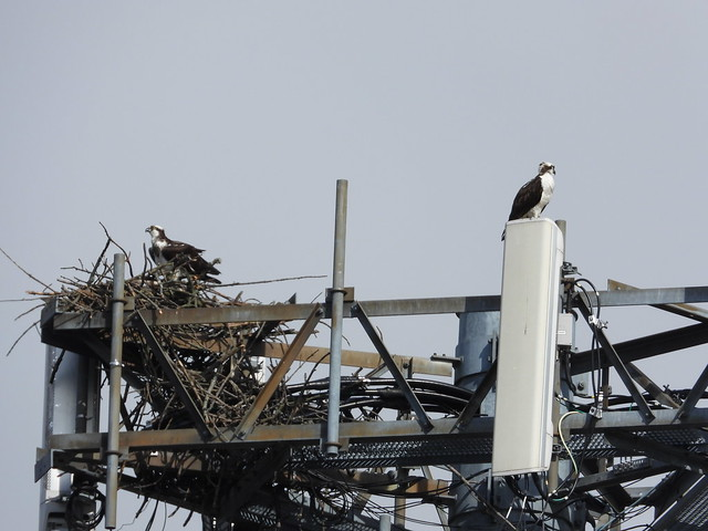 The best view - Osprey