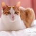 Mon chat, sheldon