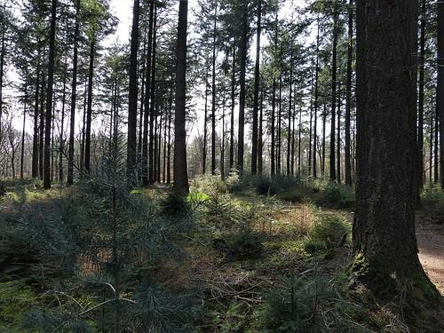1460595 panasonicdmcfz150 sallandseheuvelrug landgoeddenoetselenberg overijssel nederland netherlands holland nswandeling nijverdalholten bos woods woodland forest landschap landscape landschaft paysage