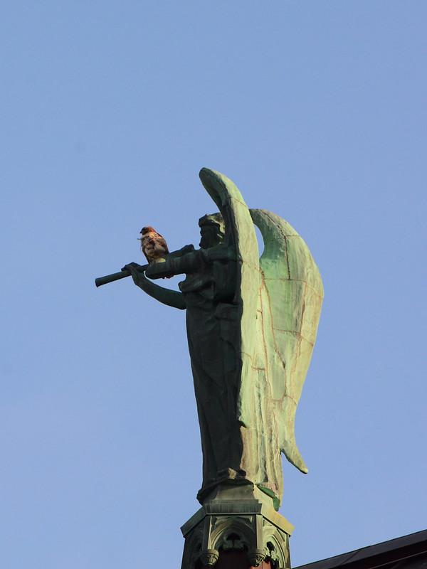 Hawk and Angel - 2070