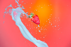 Splash Photography. Milk Spills Pouring Around Strawberry. Against Red Background.